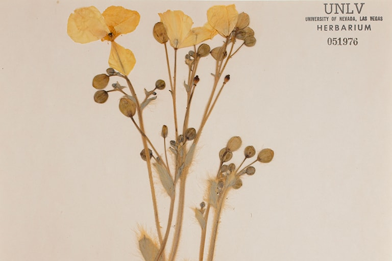 Herbarium slide of dried flowers